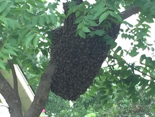 HELP!!! I Think I Have A Honey Bee Problem!!