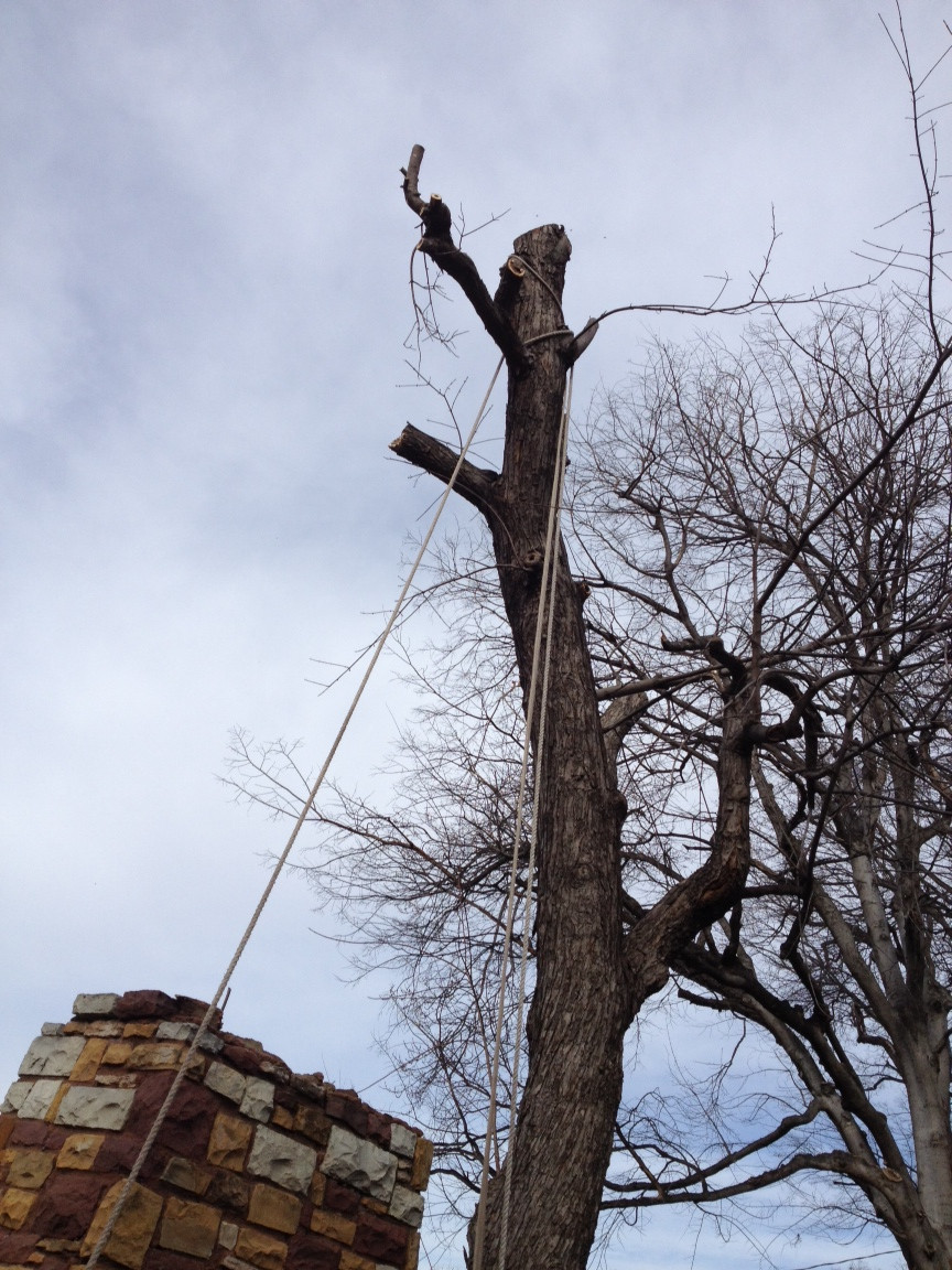 Honey Bee Removal Tree