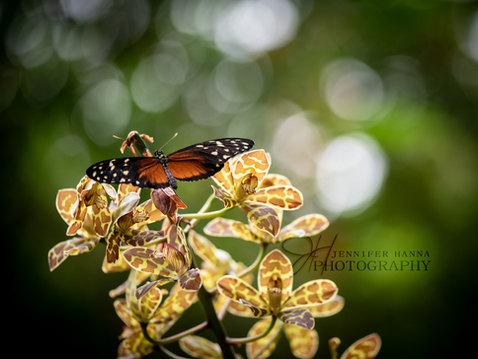 Butterfly- Cleveland Gardens.jpg