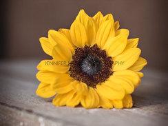 DSC_2426 Sunflower Face