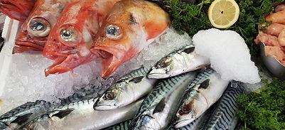 Cornish Mackerel & Red Bream
