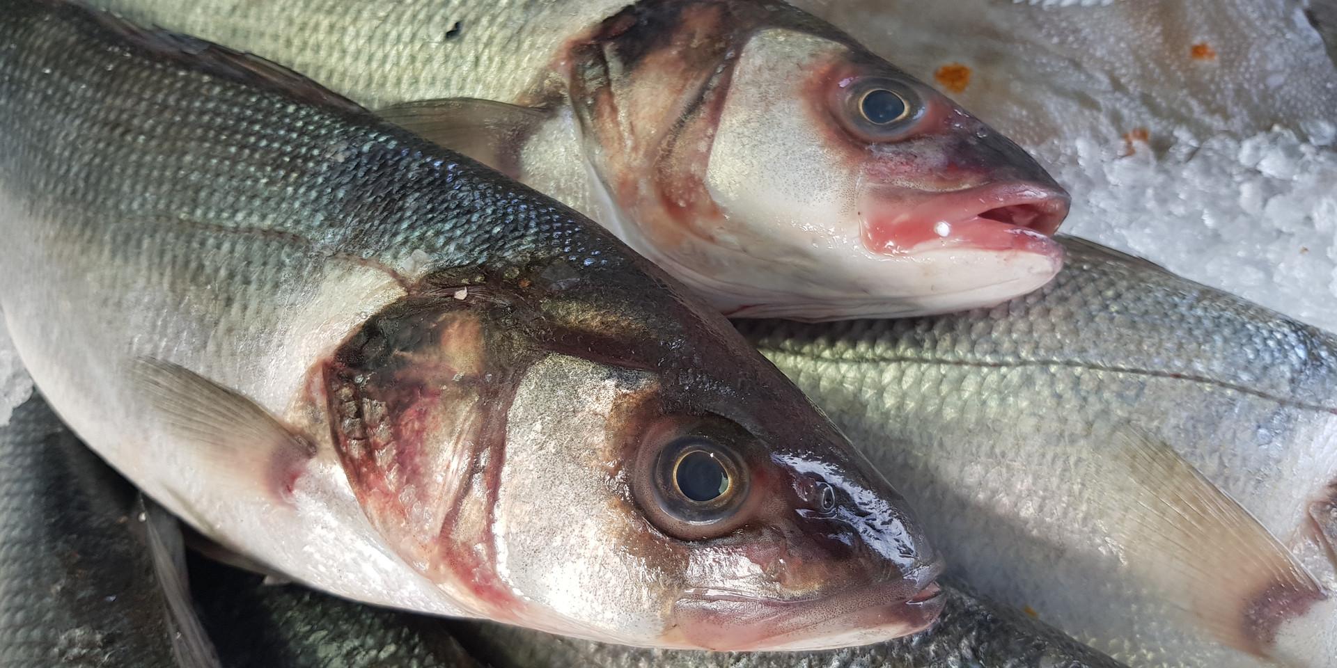 Wild Sea Bass