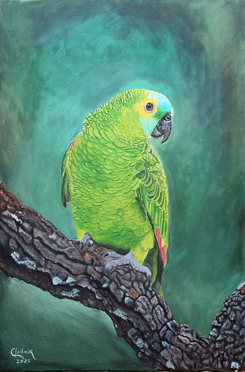 4. Papagaio-AST-70x50cm-2020 editada.jpg