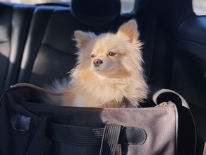 Tips for Holiday Travel with Your Pup