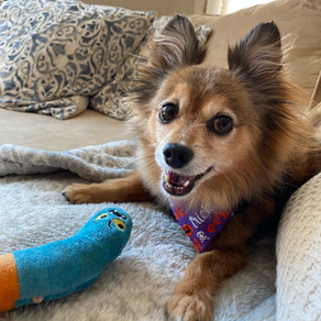 The Best Toys for Small-Breed Dogs: Norman's Toy Chest