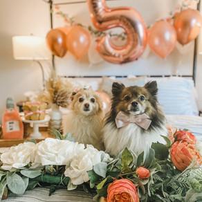"""Fun Ways to Celebrate Your Dog's Birthday or """"Gotcha"""" Day"""