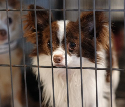What is the Difference Between a Kill Shelter Versus a No Kill Shelter?