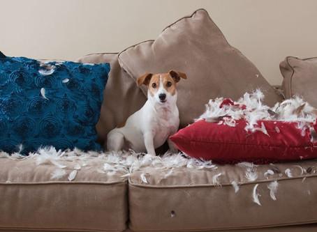 Motivos que fazem seu cachorro querer destruir objetos e tudo que ele vê pela frente!