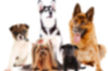 nomes-cachorros.jpg