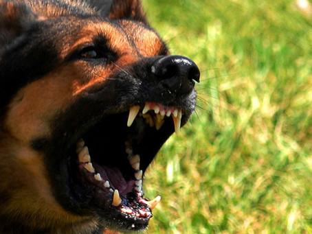 Seu cão está desenvolvendo um comportamento agressivo? Saiba o que fazer para evitar.