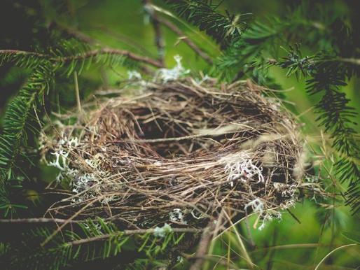 La base sicura, un nido da cui volare
