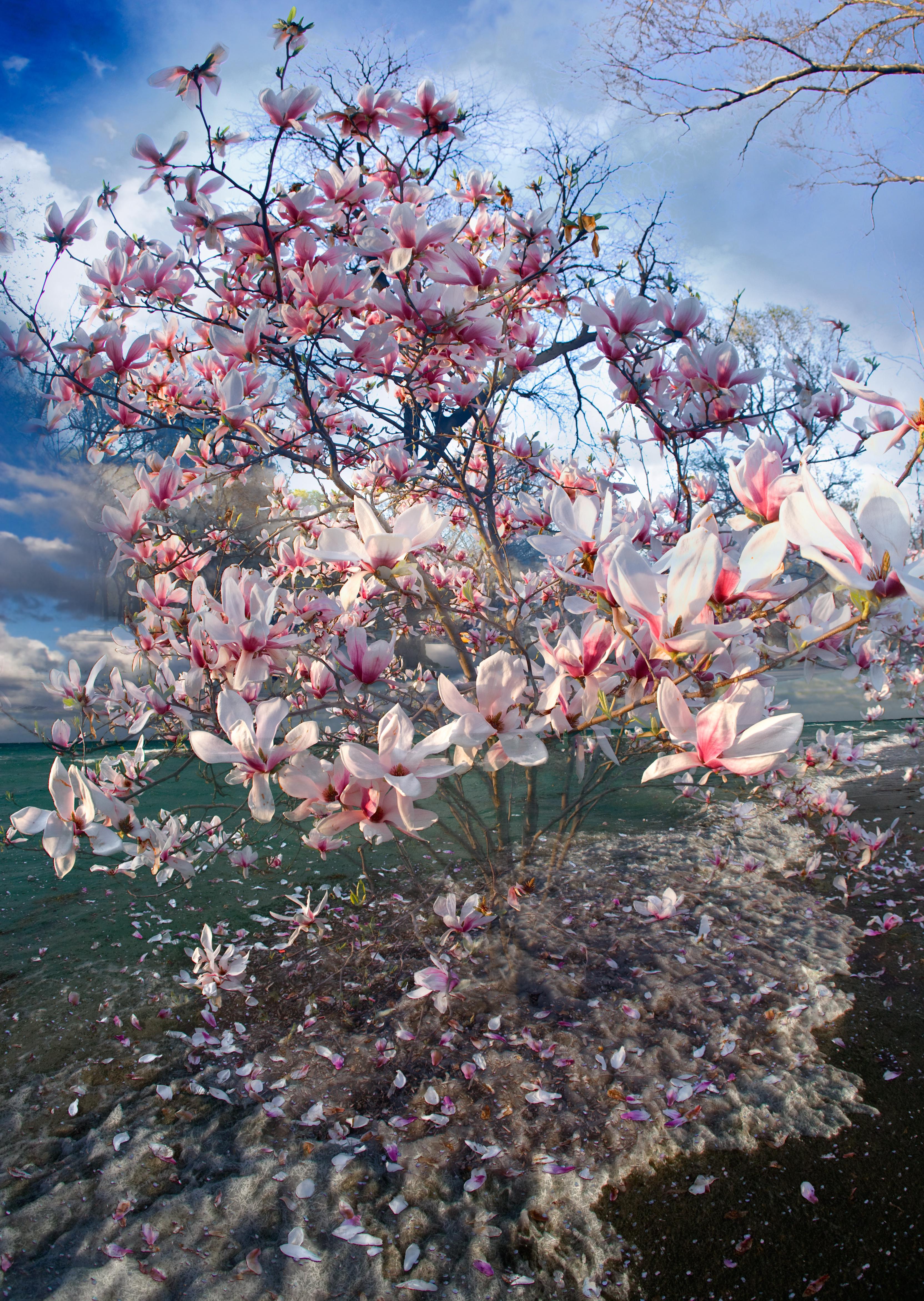 Vertical Magnolia Ocean
