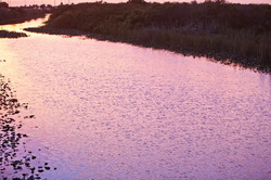 Pink Sunset Water - Everglades 1