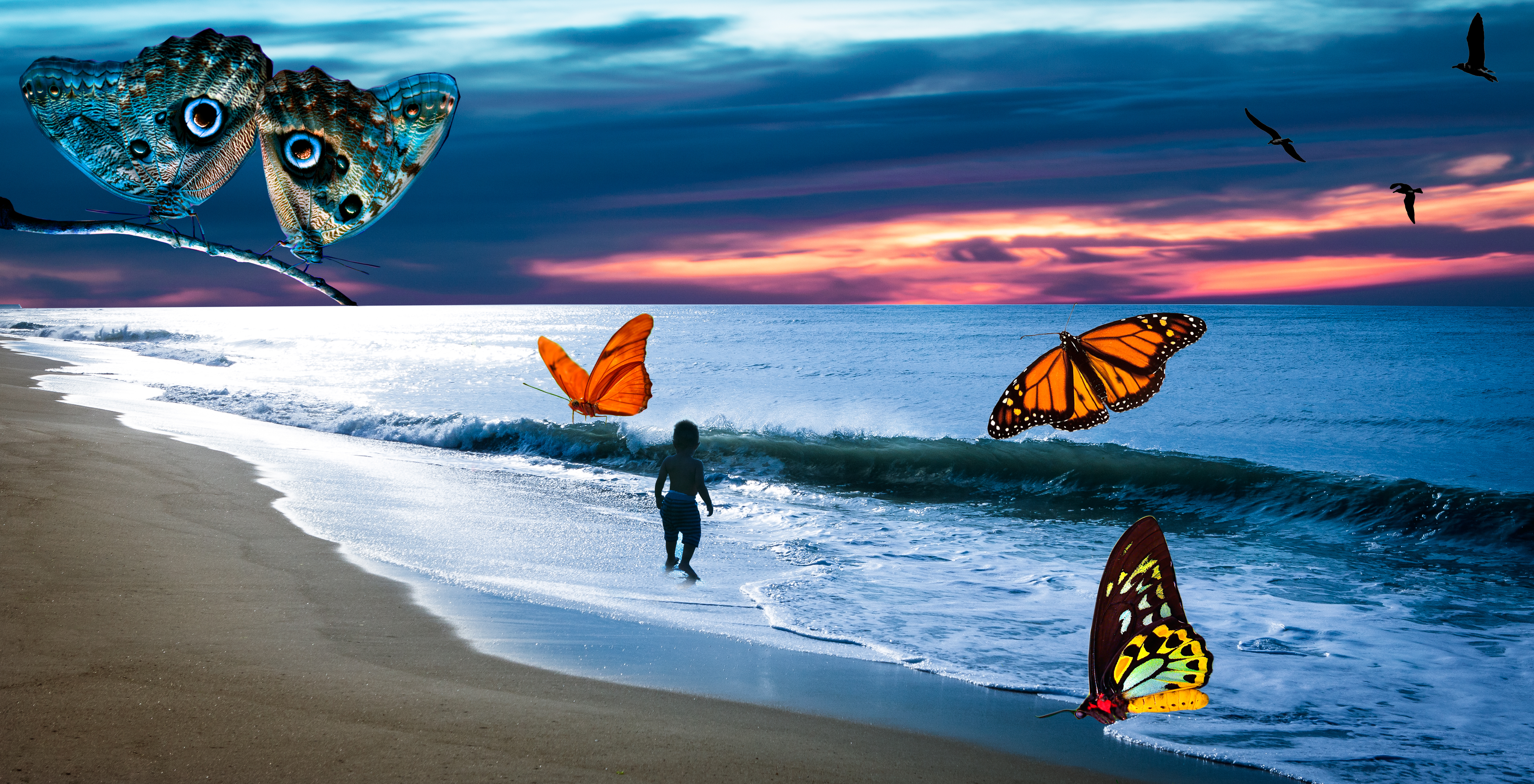 Butterfly Shore