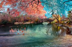 Central Park Rainbow Bridge