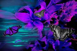 Purple Sunrise Flowers with Butterflies