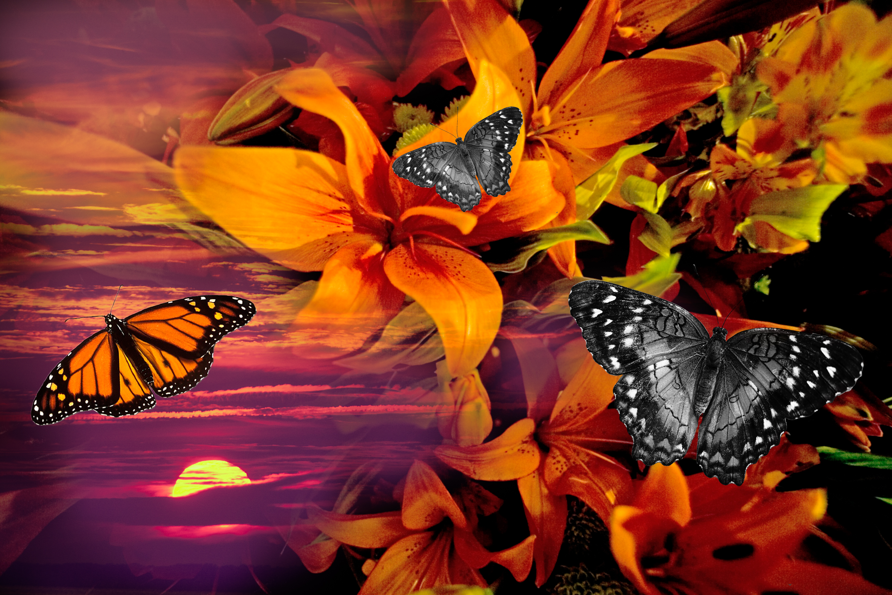 Orange Sunrise Flowers with Butterflies