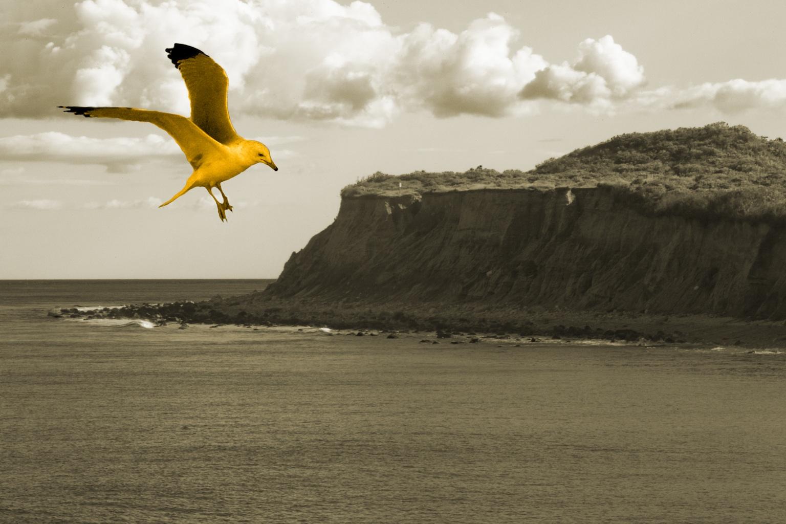 Sepia Golden Pelican Oceanscape