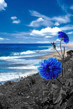 Blue Carnation Shore
