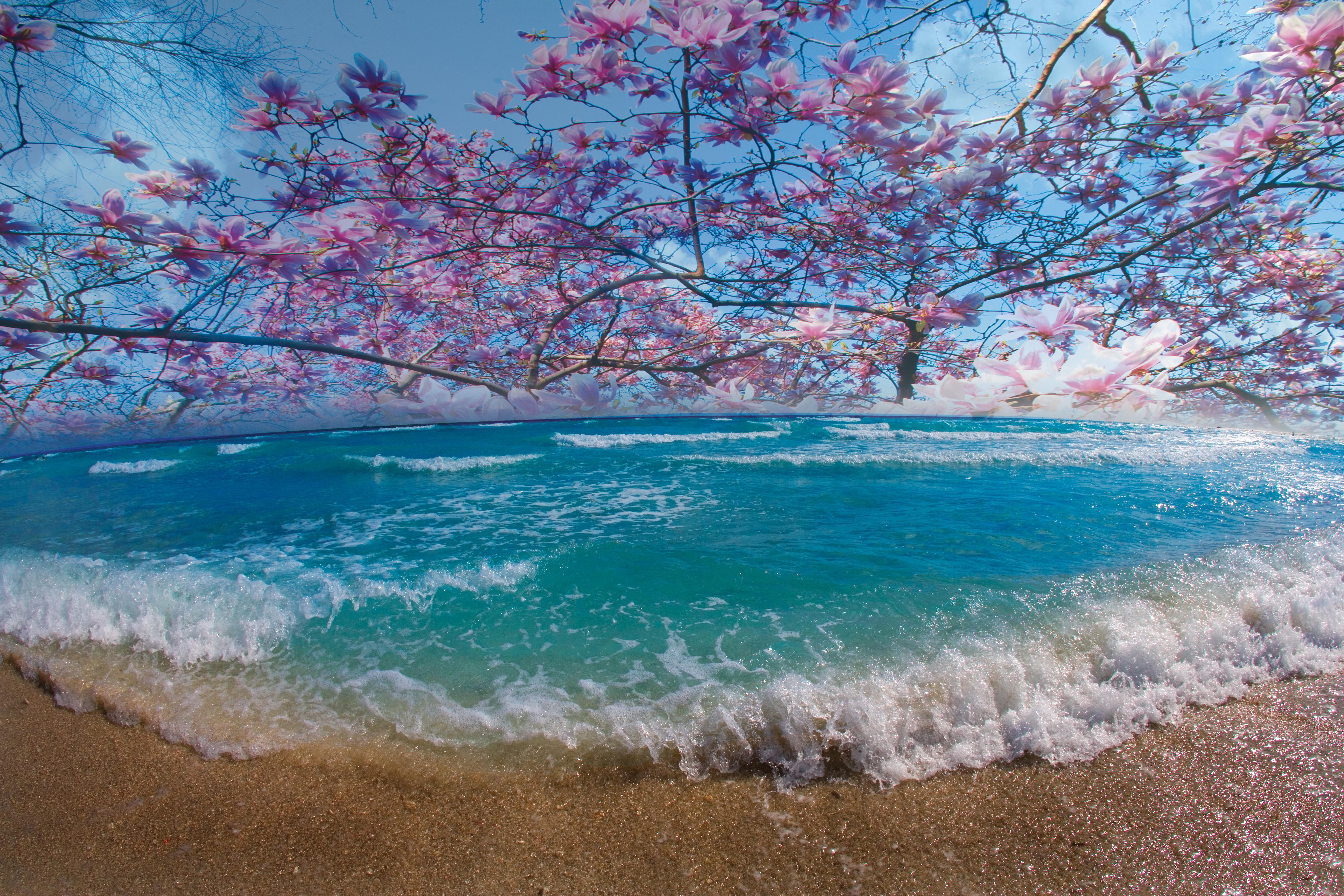 Caribbean Magnolia Ocean