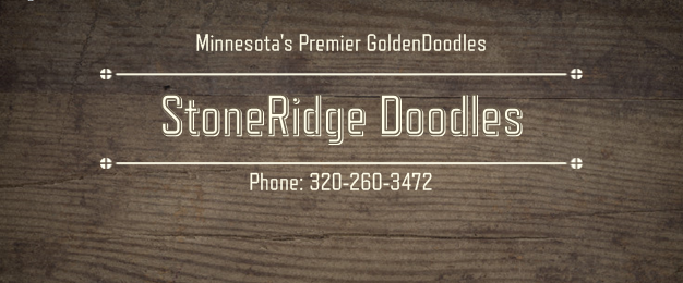 Mini Goldendoodles Bernedoodles Minneapolis Mn