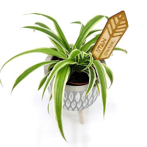 Plantenprikker 'Pluim'