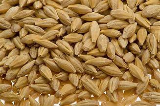 Barley Seed.jpg
