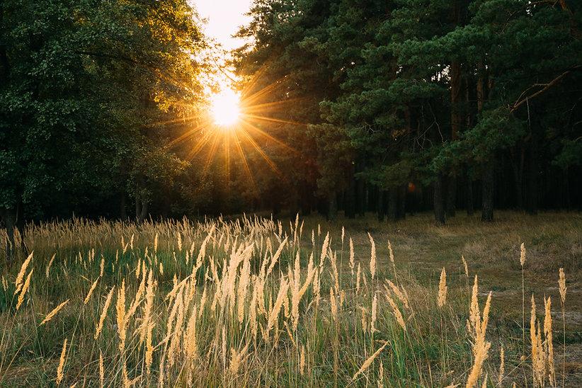 sun-shining-in-autumn-forest-sunset-sunr
