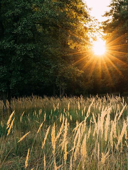 Lef Side Sun Wheat.jpg