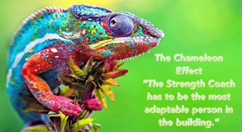Chameleon Coach