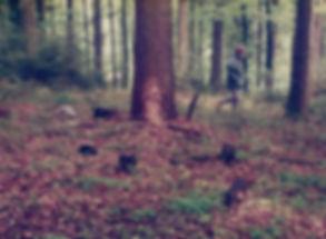 C-Wurf im Wald a.jpg