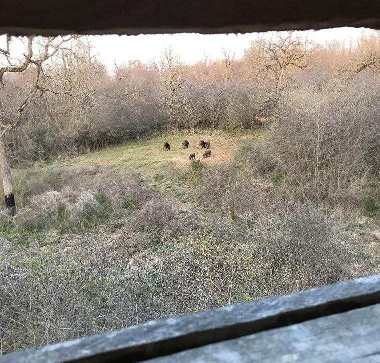 Mit Dackel auf Jagt im Elsass.jpg