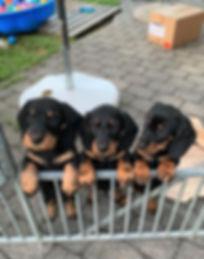 Alle drei Welpen 05-07-2019 A.jpg
