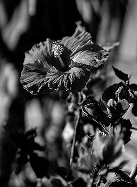 Silent Beauty_Gary Washington.jpg
