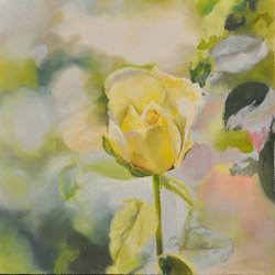 Rose+5
