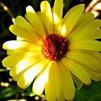 1 Banner vierkant 2 Gele bloem 200506.jp