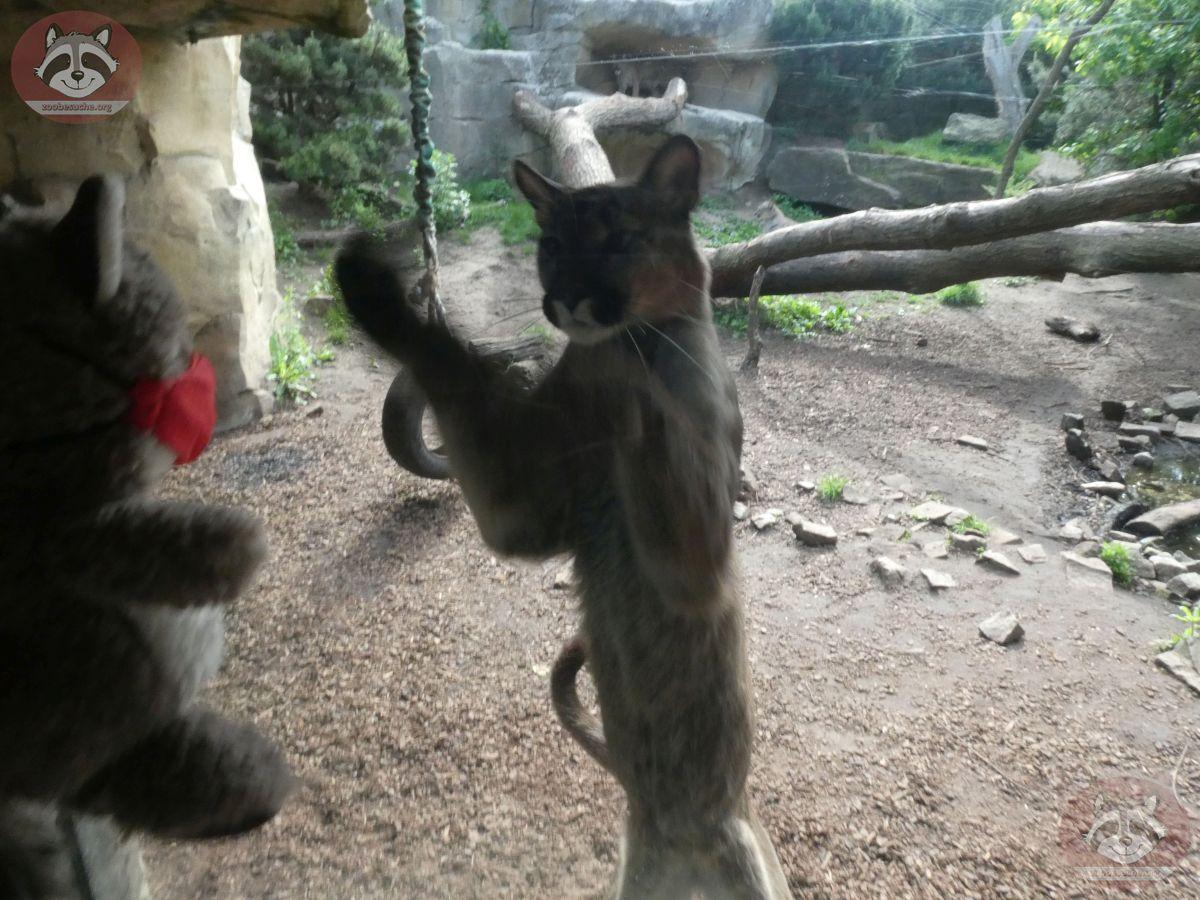 Wuschel mit Puma (15)