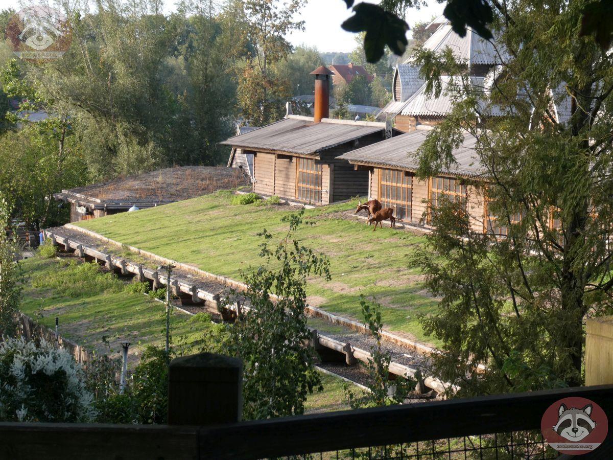Ziegen auf Dach