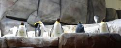 Pinguine  (9)