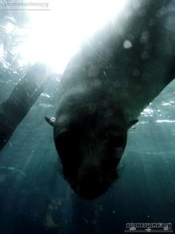 Seebär  (2)