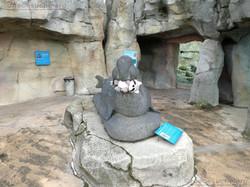 Wuschel lässt sich von Statue Fresse