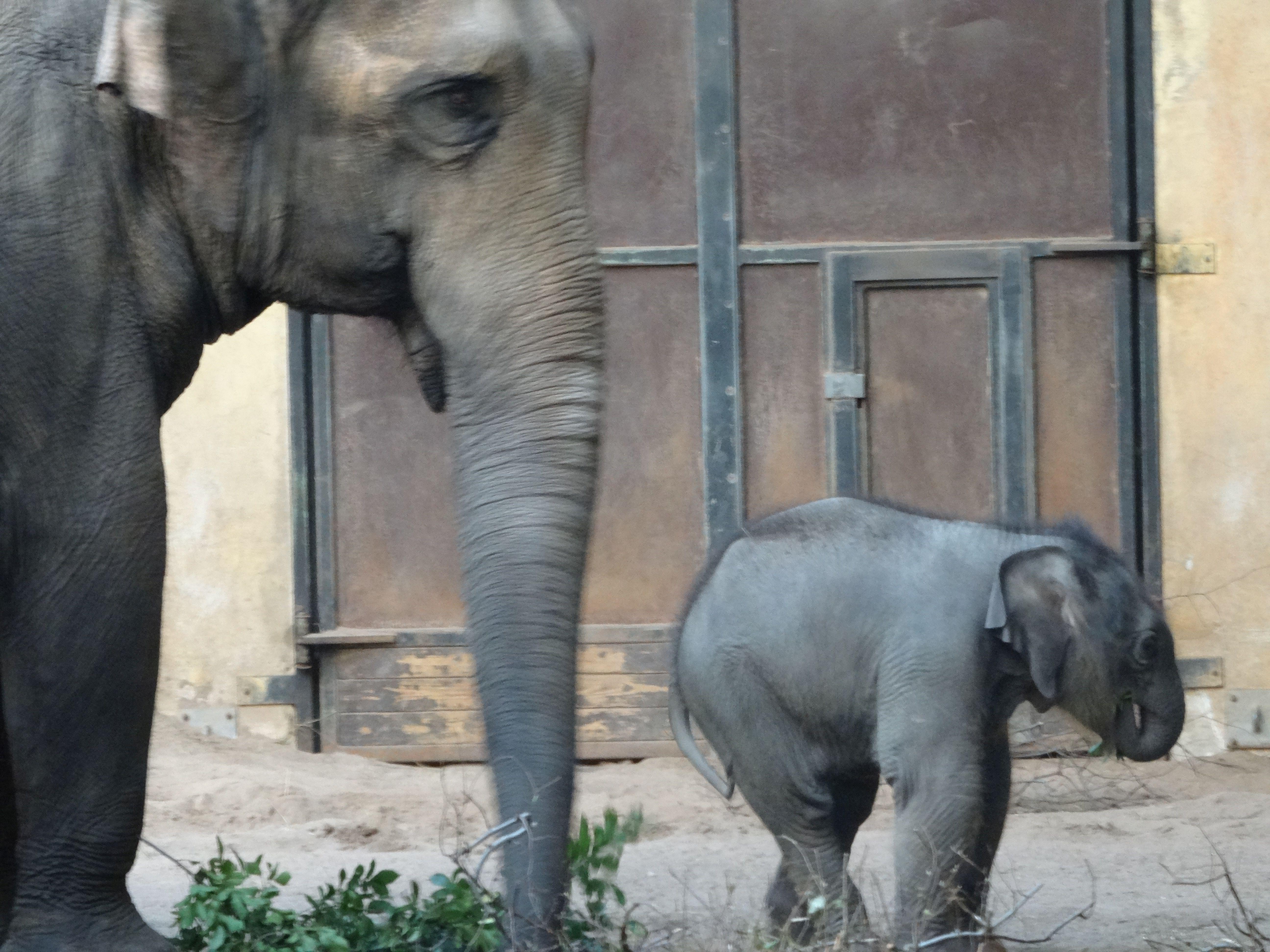 Eelefant  (8)