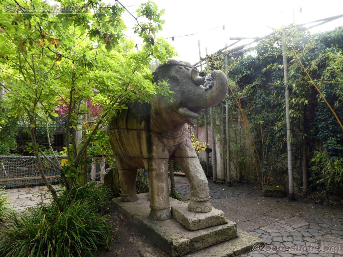 Wuschel beim Elefant  (1)