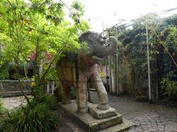 Wuschel vom Elefant gefangen