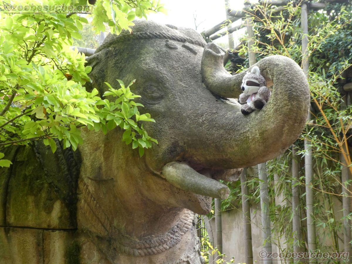 Wuschel beim Elefant  (2)
