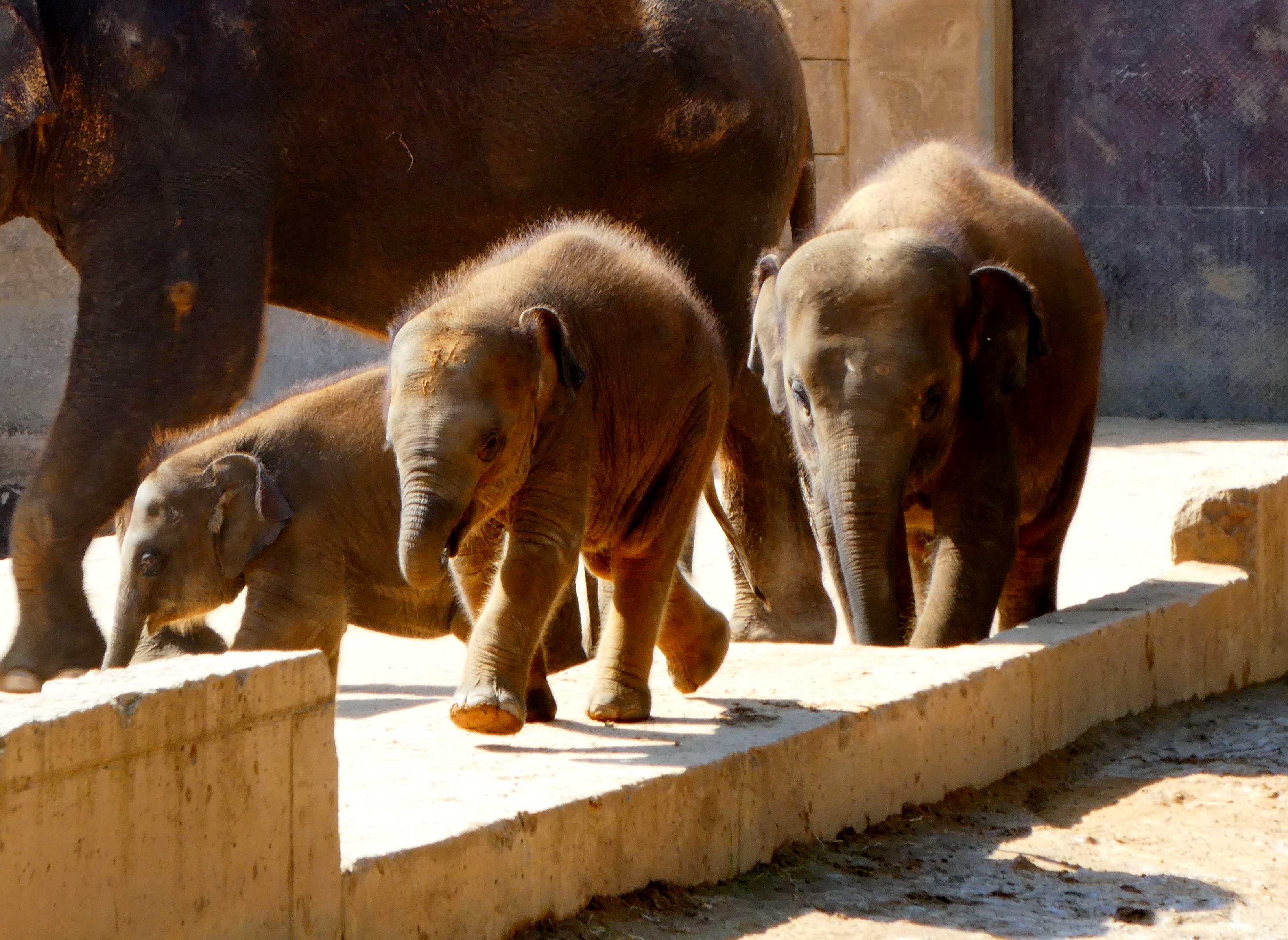 Elefanten Jungtier 2017