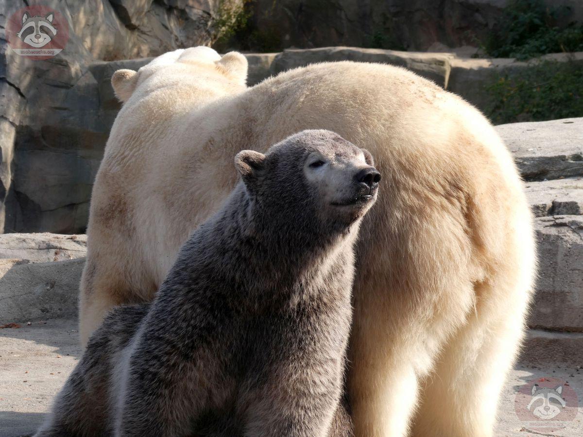 Eisbären_Milana_und_Nana_(24)