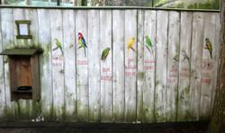 Vögel_in_Voliere