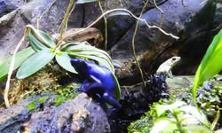 Frosch (1)
