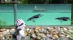 Wuschel bei den Pinguinen